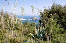 Pelara_greca-5