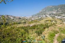 Pelara_greca-0165