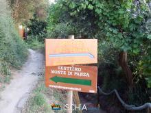 Pelara_greca-2502